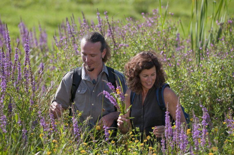 Wanderer inmitten von Blüten