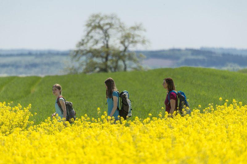 Drei Wanderinnen gehen durch die Rapslandschaft